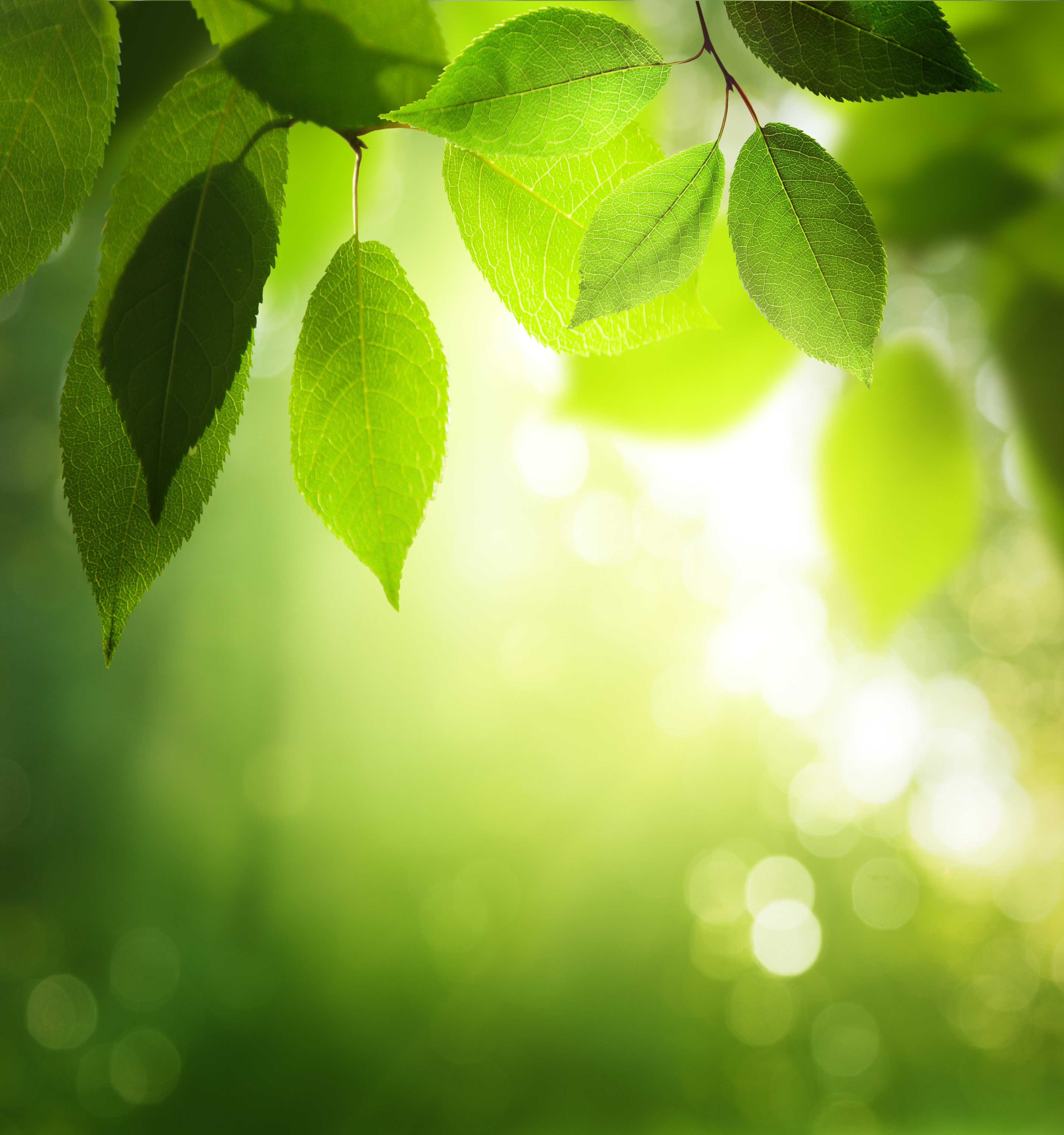 green leaves in sunny forest